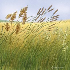 perennial-grasses