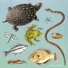 pond-animals