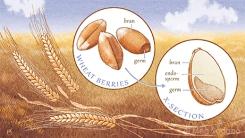 Wheat (Adobe Photoshop)