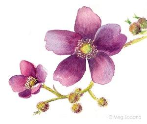 flowering-rasp