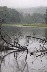 rainy-pond