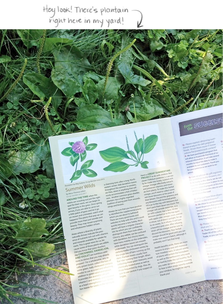 clover-plantain-article
