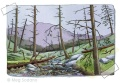 Dead Hemlock Forest (mixed media)