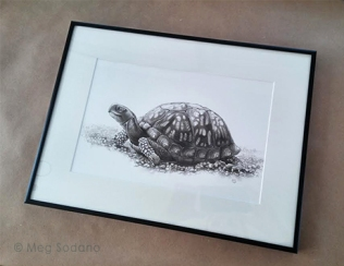 The framed illustration