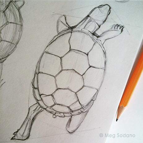 Slow And Steady Wins The Race Meg Sodano Illustration Design