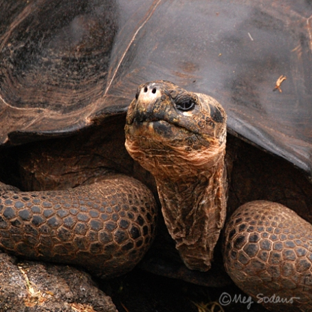 gps-tortoise1