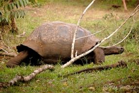 gps-tortoise4