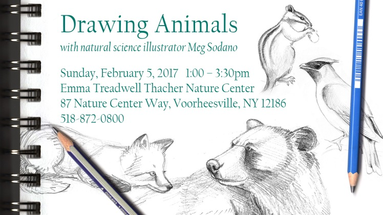 drawing-animals-ad